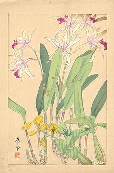Flowers of Japan 1, by Chigusa Soun 千種掃雲 (Japanese, 1873–1944). Woodblock print