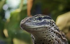 """""""Hall"""" Monitor by Greg Thiemeyer Photography"""