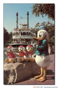 Disneyland postcard featuring Donald Duck with Huey, Dewey & Louie as the Mark Twain Riverboat churns past