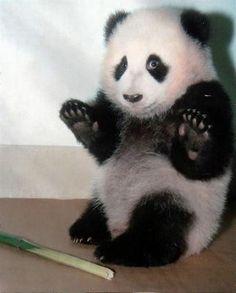 見た瞬間1発KOされてしまいそうな、かわいい動物の赤ちゃんたちの写真いろいろ - GIGAZINE