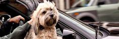 Ecco un capolavoro di civiltà: il cane può entrare nei musei - IlGiornale.it