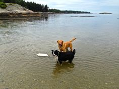 A dog-friendly Midcoast Maine adventure with tails, rails, ales, a sandy beach with lighthouse views and dockside dining.