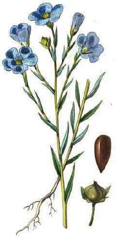 1000 images about flores de plantas perennes on pinterest - Plantas perennes exterior ...