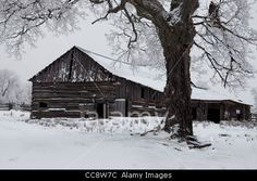 Stock Photo - An old barn in winter, on Manitoulin Island, Ontario Manitoulin Island, Ontario, Barn, Stock Photos, House Styles, Winter, Outdoor, Image, Google Search