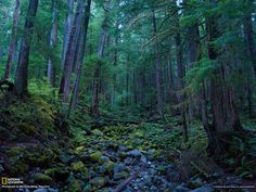 national geographic | ... Olympic National Park Wallpaper - National Geographic Photo of the Day