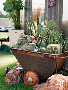 Filled to the brim with bristly and sculptural plants, a rusty metal cart contains golden barrel cactus (Echinocactus grusonii), Texas sotol (Dasyliri Succulents In Containers, Cacti And Succulents, Container Plants, Cactus Plants, Container Gardening, Container Flowers, Indoor Gardening, Vegetable Gardening, Air Plants