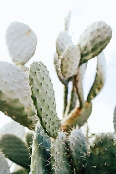 Urban Outfitters Tumblr cactus #flowers