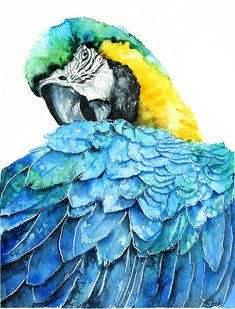 Watercolor Birds Portraits