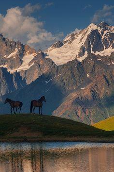 Wildlife Freedom by Soso Meladze