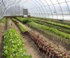 12 tipov na pestovanie v skleníku a fóliovníku | Poctivé Potraviny