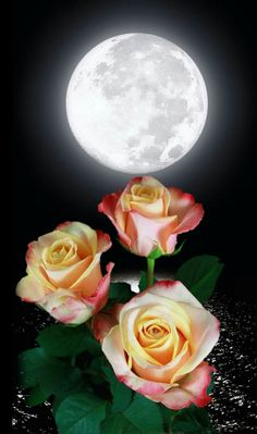 Rózsák a hold fényében 🌛🌠 Beautiful Moon, Beautiful Roses, Rose Wallpaper, Iphone Wallpaper, Red Moon Eclipse, Pictures Of Jesus Christ, Moon Images, Happy Flowers, Yellow Roses