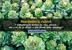 Rozchodnica ružová (Rhodiola rosea): zdravotné účinky, doplnky stravy, ako a prečo ju užívať?
