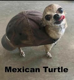 30 adorable, amusing animal memes that give you a fucking giggle . - 30 adorable, amusing animal memes that will give you a fucking giggle – animal pictures – # amu - Funny Animal Jokes, Funny Dog Memes, Cute Funny Animals, Cat Memes, Funny Dogs, Cute Dogs, Cute Animal Humor, Funny Quotes, Funny Puppies