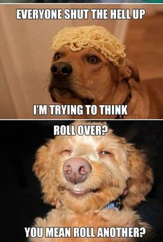 1000+ images about High dog memes on Pinterest | Dogs, Dog ...