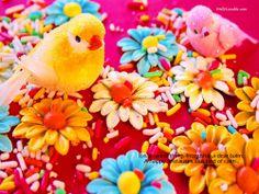 Birds Friendship Wallpaper