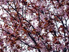 Jemina Staalon matkaploki: Itäkeskuksessa kukkii kirsikka ja moni muu
