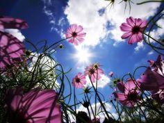 bloemenzee bloemenzee bloemenzee - Google zoeken