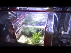 Educational video on How To Set Up A Sump Refugium Filtration System for a Saltwater Tank or Reef Aquarium. Refugium Sump Filter Set Up with Miracle Mud, Mac. Aquarium Setup, Reef Aquarium, Saltwater Tank, Saltwater Aquarium, Salt And Water, Fresh Water, Aquarium Supplies, Marine Fish, Sump