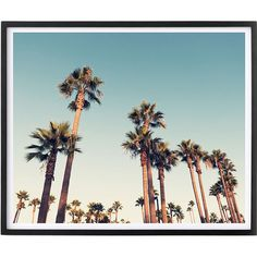 California Nights Framed Print