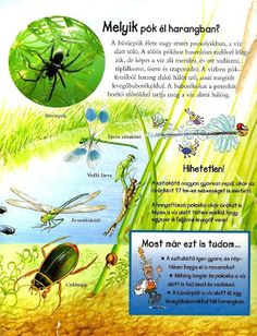 Bugs And Insects, Environment, Science, Teaching, Decoration, School, Creative, Picasa, Animales