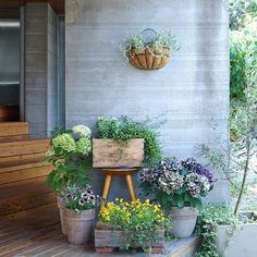 Balcony Garden, Garden Pots, Herbaceous Border, Flower Pots, Flowers, Garden Shop, Green Garden, Garden Styles, Backyard Landscaping
