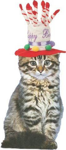 Image Result For Cats With Birthday Hats