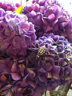 Fresh cut stunning hydrangea flowers are seasonally available at Flyboy Naturals.   www.flyboynaturals.com