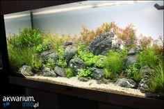 Zoobotanica 2013 - akwaria wystawowe