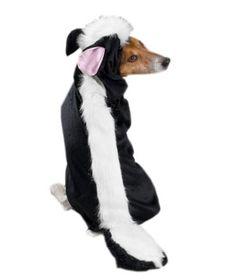 Zack 'N Zoey Little Stinker Dog Halloween Costume