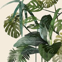Lovely work by Agata Wierzbicka #agatawierzbicka #illustration #plant #nature #art #tropical by ohhdeer