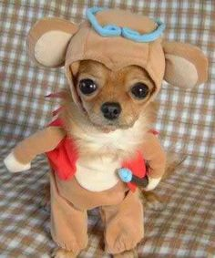 Funny dog picture of a Chihuahua pet costume. A cute puppy in a Halloween getup. A humorous canine photo and adorable animal pic. & 20 best Dog Costumes images on Pinterest | Costume ideas Mascot ...