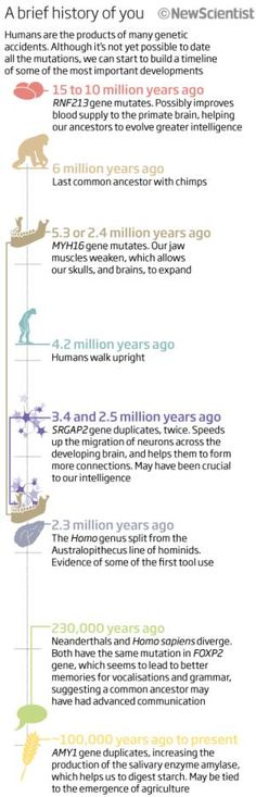 An image showing the history of humans from the New Scientist... a good summary of the mutations that might have caused us!