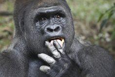 Gorilla Trekking in Ruanda mit Natürlich-Reisen! - Rundreisen - Gruppenreisen und Individualreisen - Natürlich Reisen!