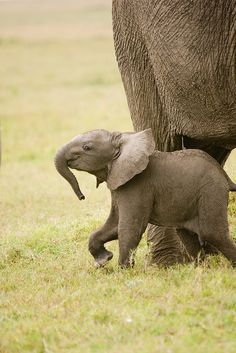 animals-plus-nature:  Trunk by Richard@Skye on Flickr.