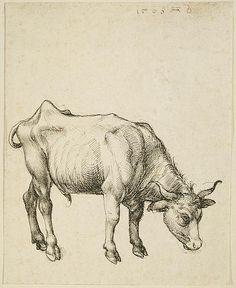 Young Steer, Albrecht Durer - WikiArt.org