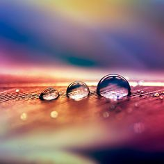 | drop | 6 by *Somebody--else Photography / Macro / Nature
