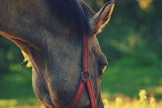 #horse #polishhorse