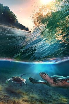 Tropical paradise with turtles by Vitaliy Sokol on 500px