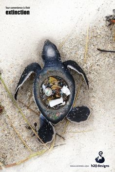 Indeed, plastic is everywhere, and it's clogging our oceans. About 8 million metric tons of plastic waste is dumped into the world's oceans every year, and all marine life—from tiny plankton to giant whales—have to live in it.  #PlasticPollution #Pollution