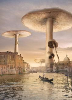 ♂ Dream imagination surrealism surreal art Venice mushrooms
