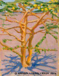 Akaasiapuu aavikolla, 1909