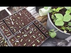 Allotment Diary : Polytunnel veg growing update on a wet windy evening - YouTube