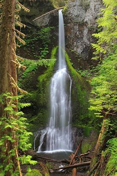 Marymere falls in Olympic National Park - Washington. This is beautiful, can't wait to see it in person! Beautiful World, Beautiful Places, Amazing Places, Washington State Parks, Seen, Beautiful Waterfalls, Olympic Peninsula, Zion National Park, The Great Outdoors