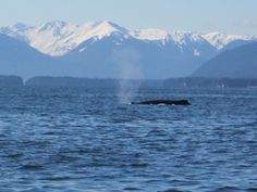 humpback whales in Juneau, Alaska  YES, been there, seen it and done it!