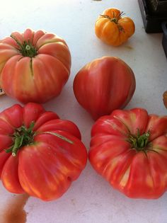Aug. 29 -- Some heirloom tomatoes from Our Garden. We're close to 6,500 pounds of produce donated so far this season.