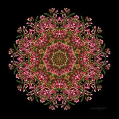 Meditation Art  Red Honeysuckle Flower Mandala  by karencaseysmith, $25.00
