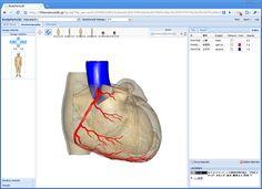 人体のあらゆるパーツの精巧な3Dデータをダウンロードできるサイト