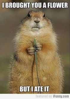 I Brought You A Flower But I Ate It