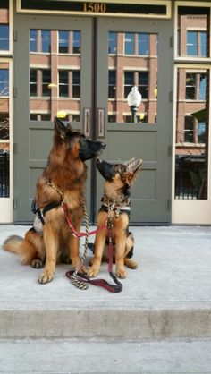 Click visit site and Check out Best German Shepherd T-shirts. This website is excellent. Tip: You can search your name or your favorite shirts at search bar on the top.