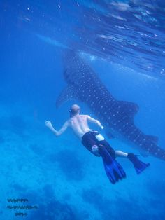 MUST do this before i die!! OMG this looks just exhilarating! (Swimming with Whale Sharks in Oslob, the Philippine Islands)